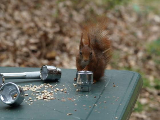 Nusskastenkontrolle vom Experten für Nüsse
